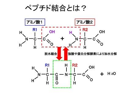 peptide-bond